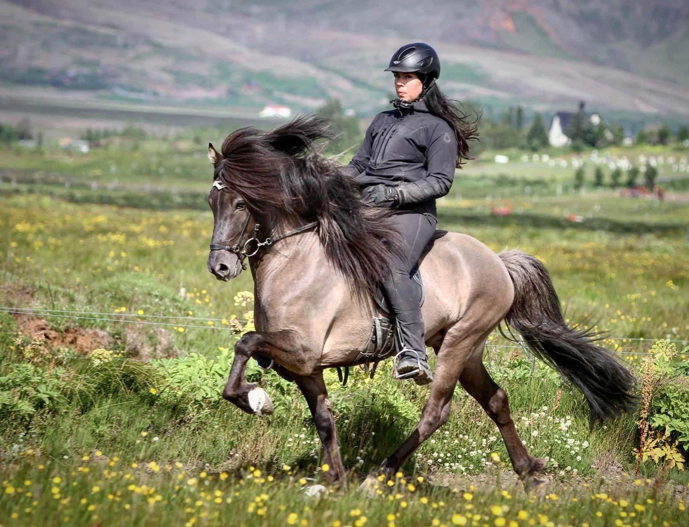 Árvakur IS2016187053 frá Auðsholtshjáleigu