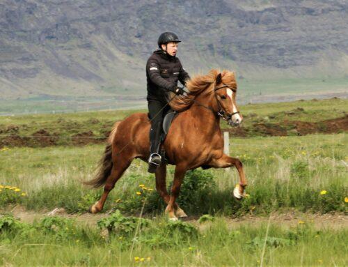 Viðja frá Auðsholtshjáleiga
